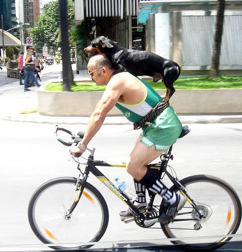 O ciclista e o cachorro