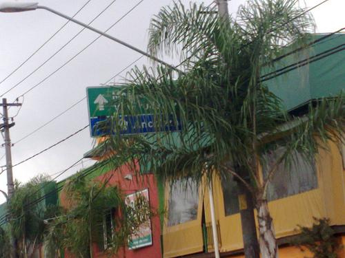Árvore esconde sinalização