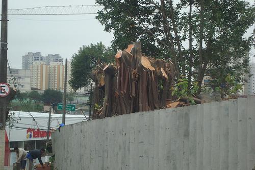 Morte da árvore