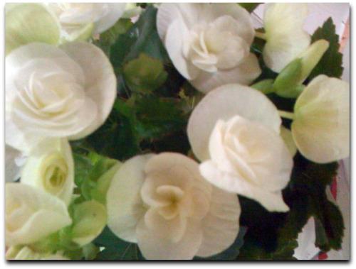 Flores Maria Lucia Solla
