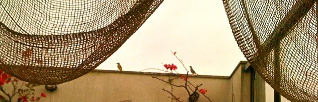 Pássaro por Maria Lucia Solla