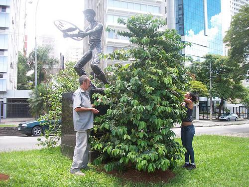 Estátua Colhedor de Café