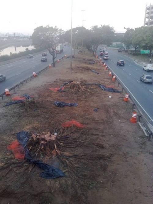 Árvores cortadas na Marginal Tietê
