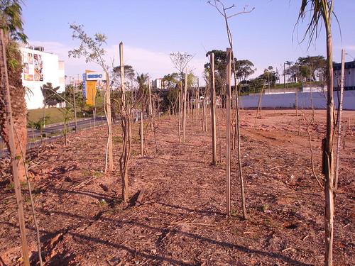 Árvore seca