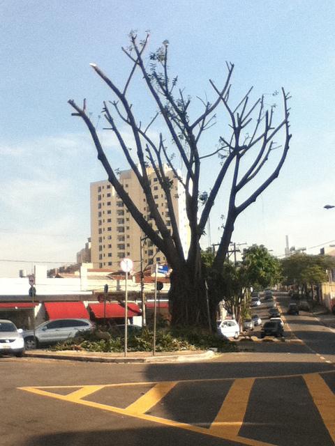 Árvore pelada