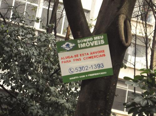 Vende-se árvore