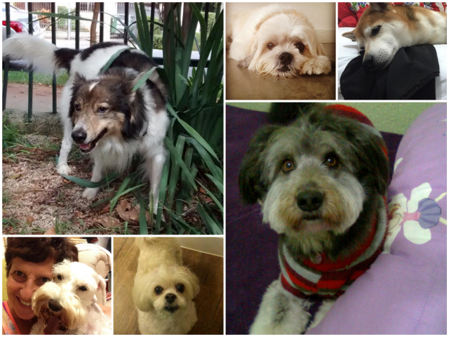 cachorro1_Fotor_Collage