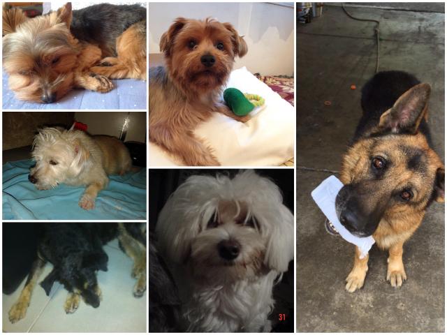 Cachorros2_Fotor_Collage