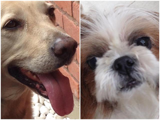 Cachorros3_Collage