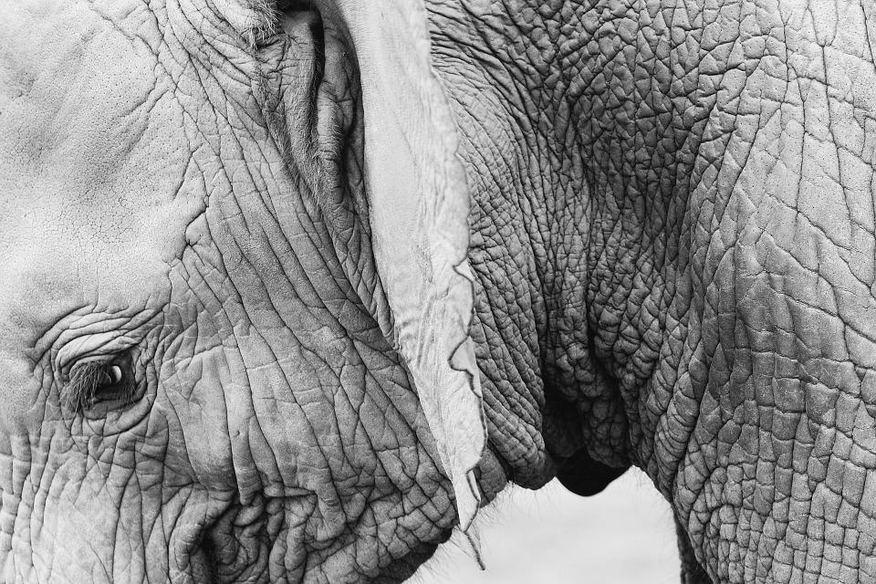 elephant-820147_960_720